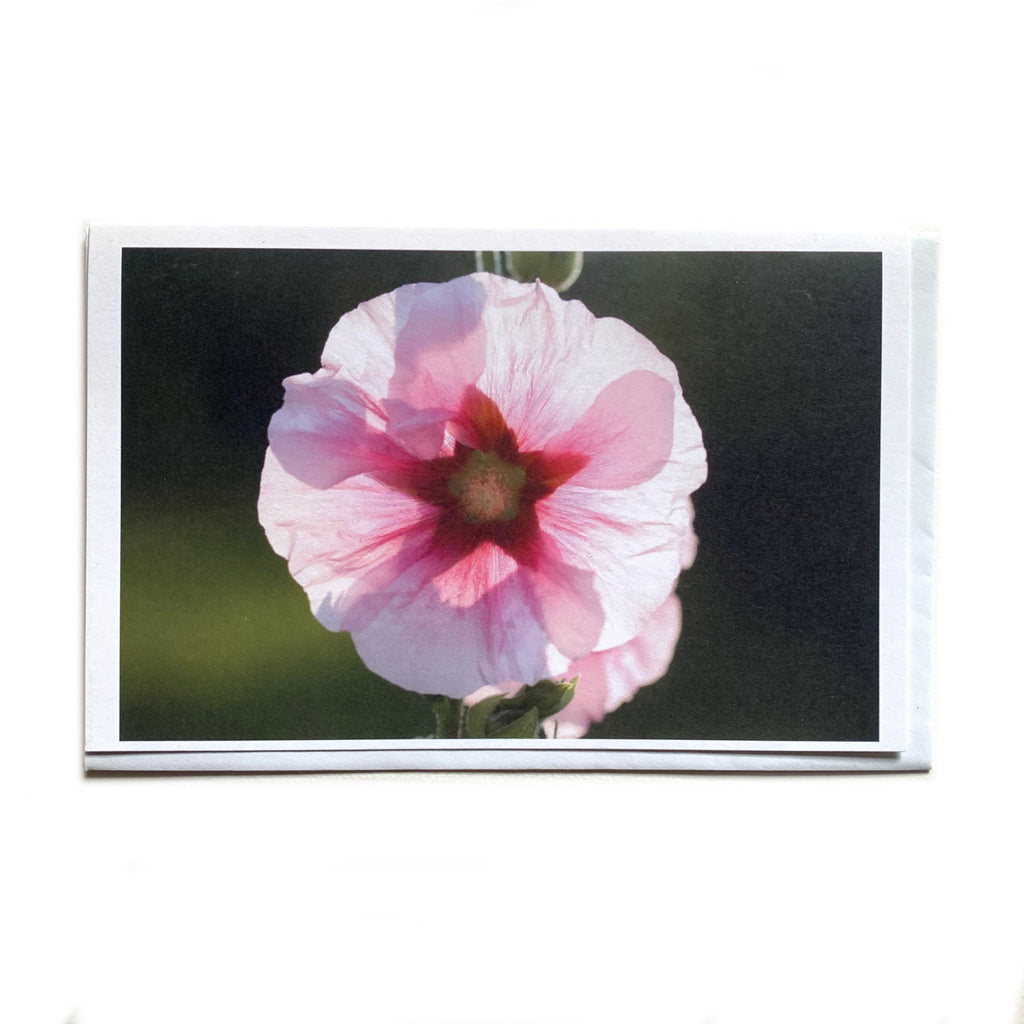 Pink Flower - Photo Art Card - Free Collective