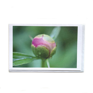 Made in Canada art card with macro photograph of a pink and green peony flower bud.
