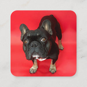 Skull and Dog Bones Card - Red