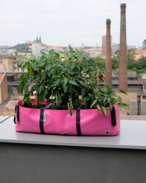 Blooming Walls Canada The Green Block Plant Bag - Large - Pink filled with vegetables on balcony'