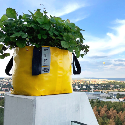 Blooming Walls Canada The Green Bag Plant Bag - Yellow Bag filled with Strawberry Plant