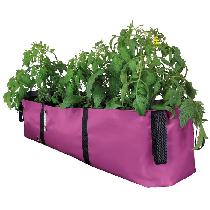 Blooming Walls Canada The Green Block Plant Bag - Large - Pink