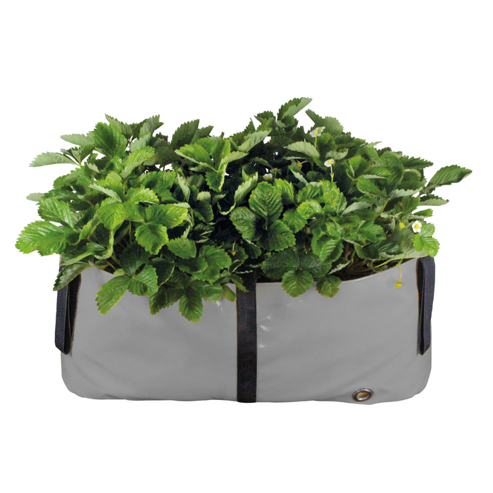 Blooming Walls Canada The Green Block Plant Bag - Medium - Gret