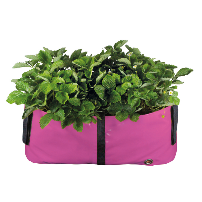 Blooming Walls Canada The Green Block Plant Bag - Medium - Pink