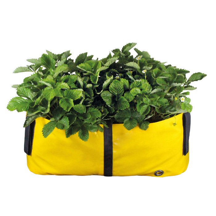 Blooming Walls Canada The Green Block Plant Bag - Medium - Yellow