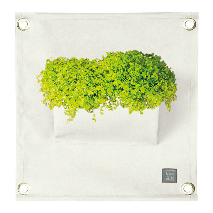 Blooming Walls Canada The Green Pockets Hanging Planter - White