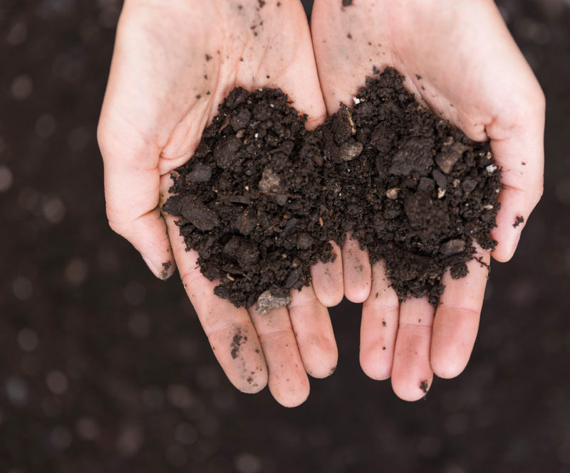 Rich, Dark, Life Giving Soil