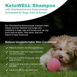 Ketoconazole Chlorhexidine Shampoo for Dogs & Cats - Medicated Antifungal & Antiseptic Shampoo for the Treatment of Ringworm, Yeast Infections, Acne, Mange & Hot Spots Oatmeal & Aloe 12oz Mint Scent