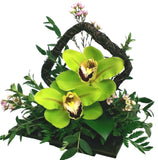 Double Cymbidium Orchid