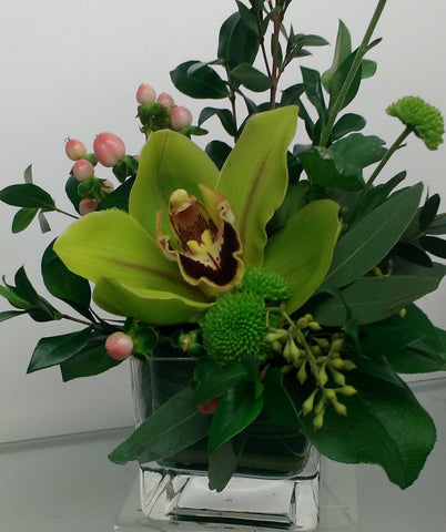 Single Cymbidium Orchid