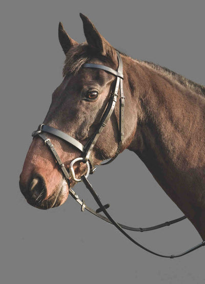 Mountain Horse Kaliber Bridle