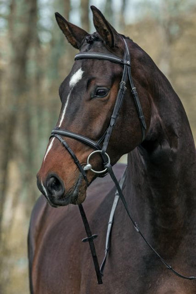 Mountain Horse Meteor Bridle Negro
