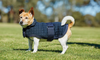 Weatherbeeta Comfitec Thermocell Dog Coat Outlet