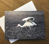 Steven Schwab - Set of 6 Water Bird Notecards