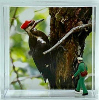 "Steven Schwab - 2"" X 2"" Magnet Box - Pileated Woodpecker"