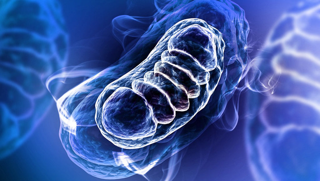 Cancer as a Metabolic, Mitochondrial Disease