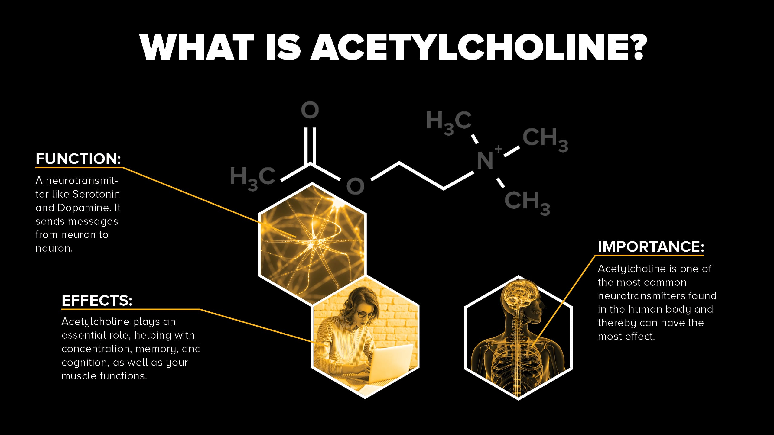 What is Acetylcholine?
