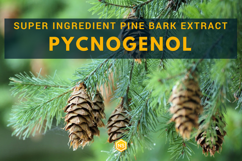 Pycnogenol Does Pine Bark Extract Have Any Real Benefits Natural