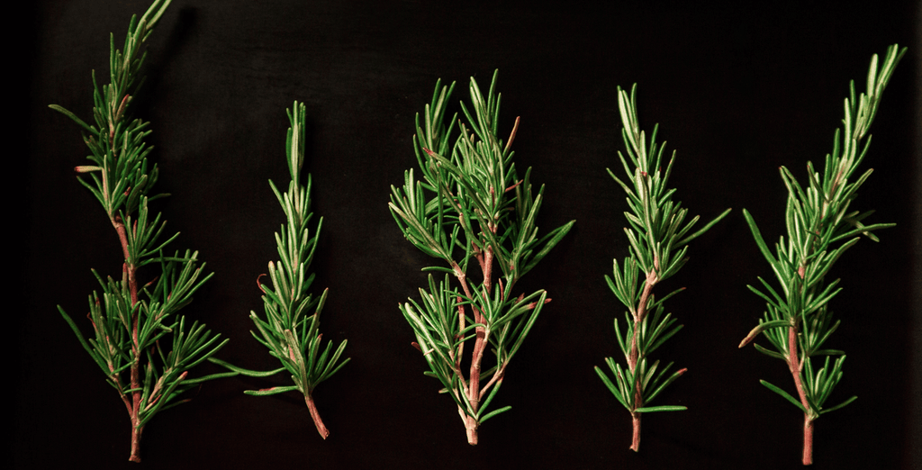 Best Anti Inflammatory Herbs - Rosemary