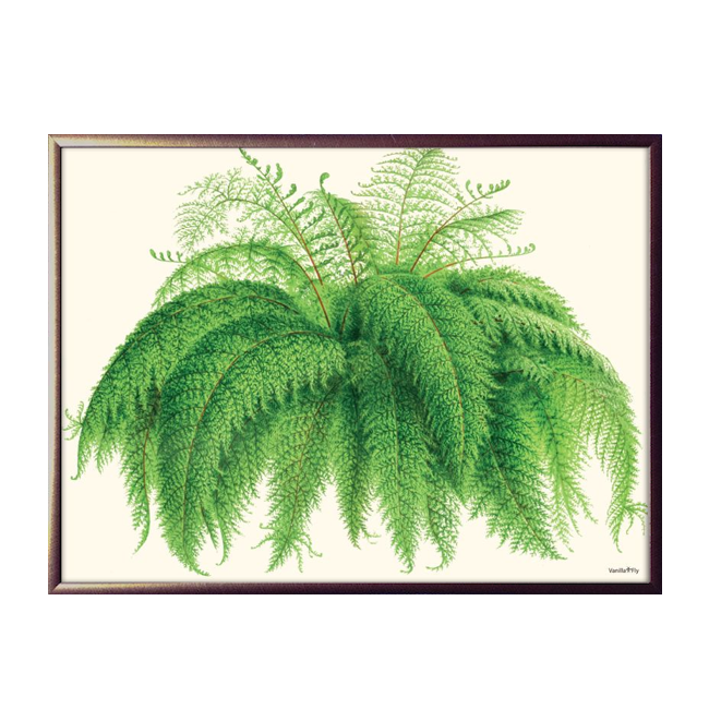 Fern Fantastic Framed Print