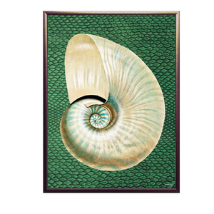 Pearly Conch Framed Print