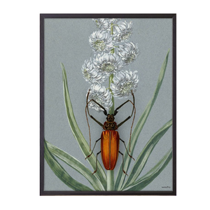 Orange Bug Framed Print