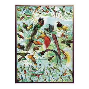 Bird Party Framed Print