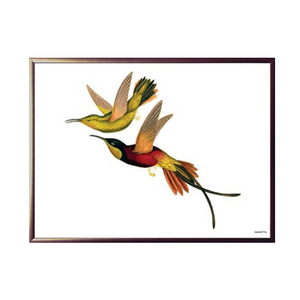 Wild Birds Framed Print