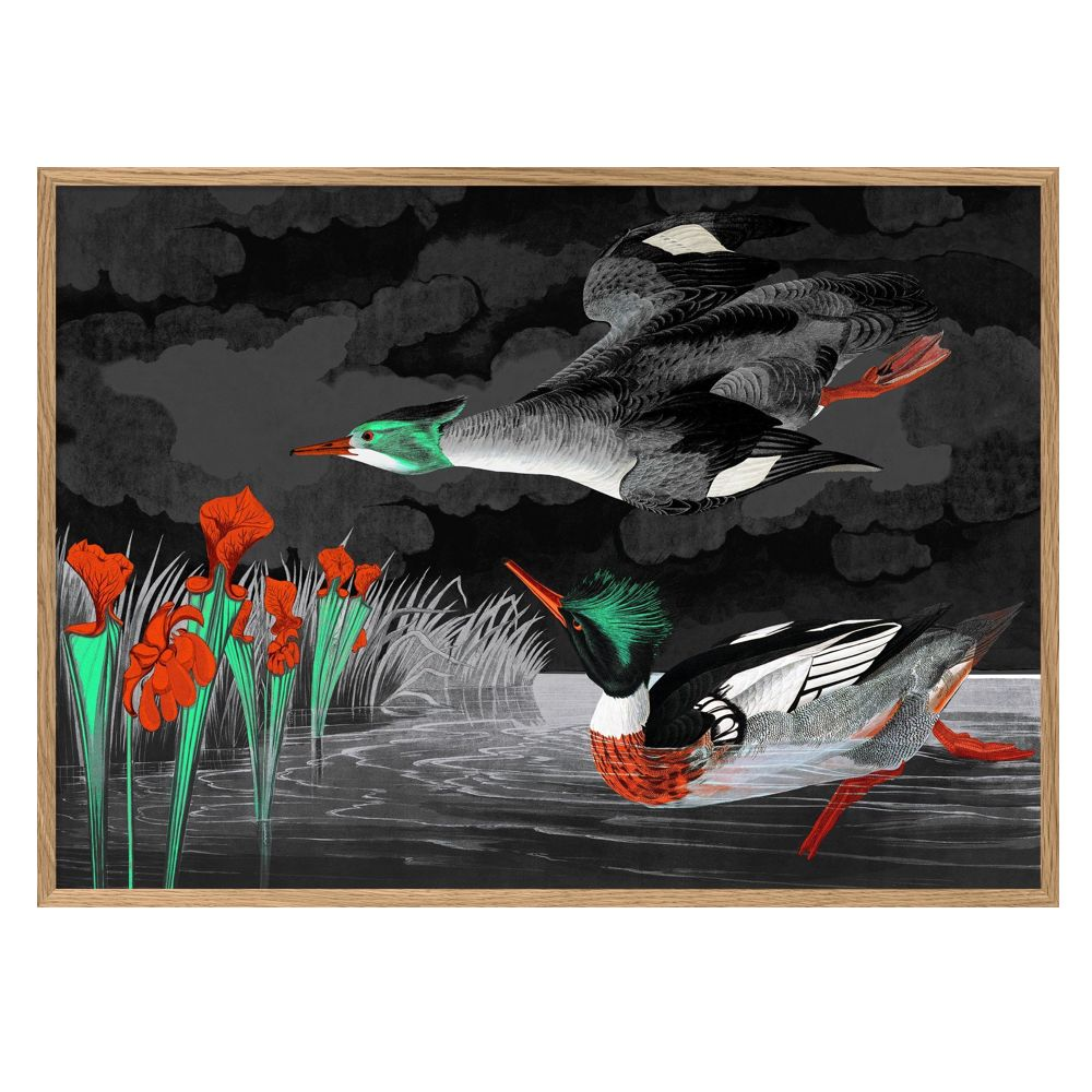 Red Breasted Merganser Print With Oak Frame
