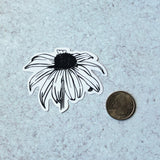 black eyed-susan