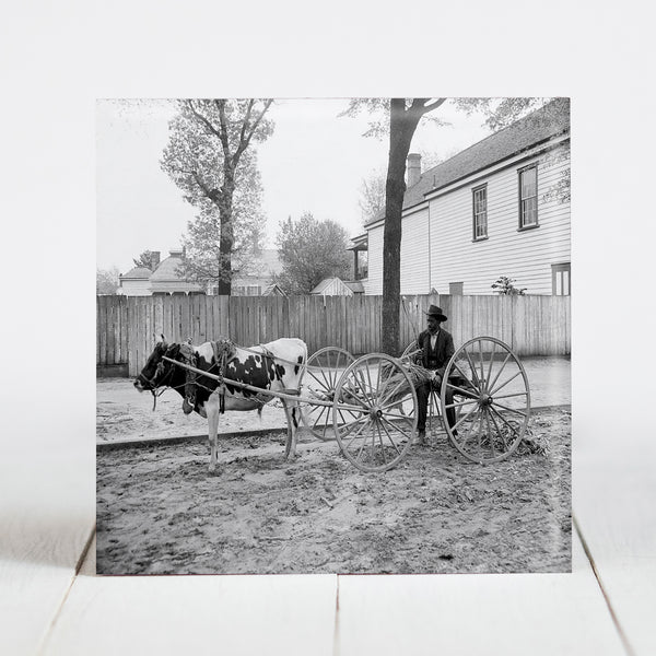 South Carolina Peddler - Aiken, SC  c.1905