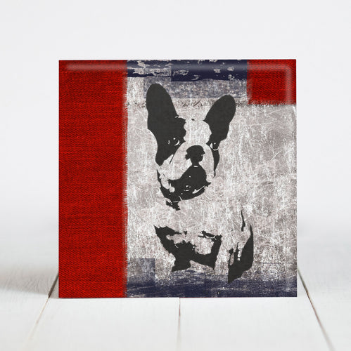 French Bulldog or Boston Terrier