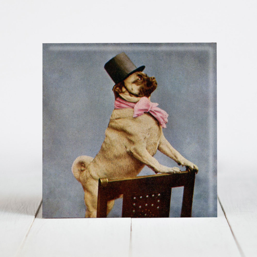 Pug With Top Hat c.1905