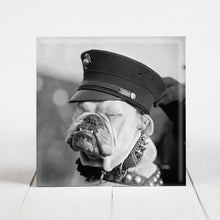 Load image into Gallery viewer, Pvt. First Class Chesty the Bulldog - Marines Mascot