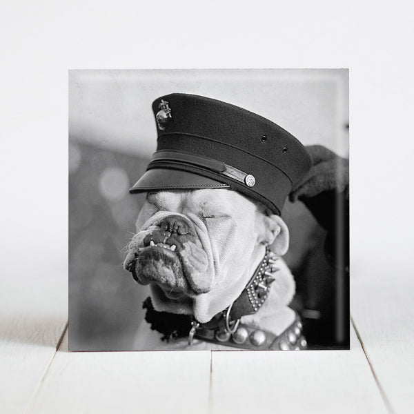 Pvt. First Class Chesty the Bulldog - Marines Mascot
