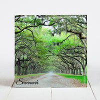 Alley of Oaks Road at Wormsloe Historic Site -  Savannah, GA