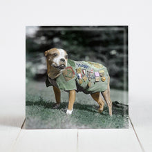 Load image into Gallery viewer, Sargeant Stubby - Highly Decorated Mascot of the 102nd Army Infantry c.1920