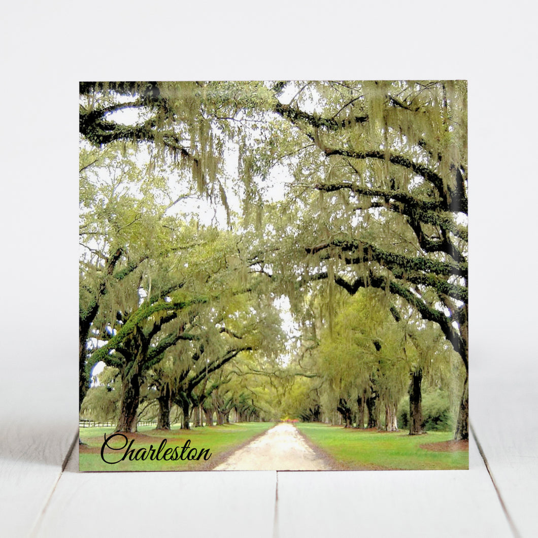 Road at Boone Hall Plantation - Charleston, SC