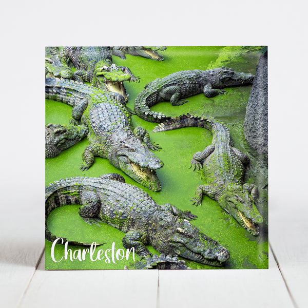 Crocodiles - Charleston, SC