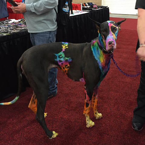 This beautiful Dane was on the cover of Groomer To Groomer Magazine. So Sweet.