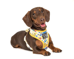 Adjustable Dog Harness: Rubber Ducky
