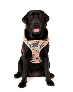 Adjustable Dog Harness: Troppo Toucan