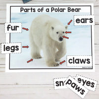 Polar Bear Activities