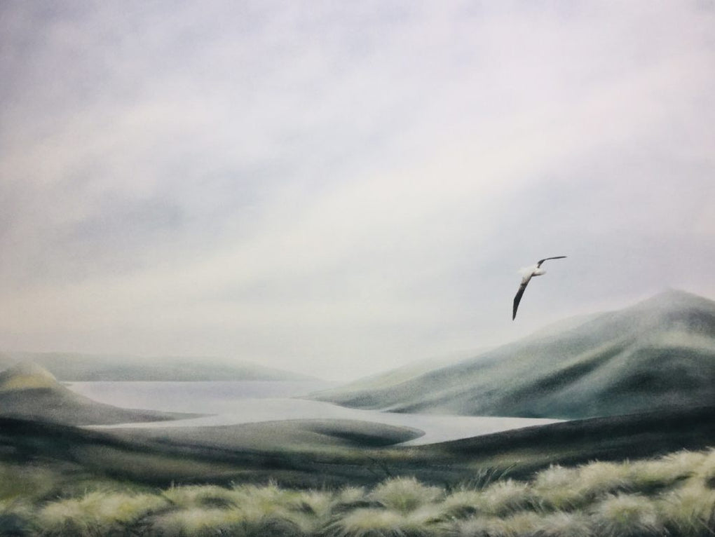 Royal Albatross - Campbell Island (SOLD)