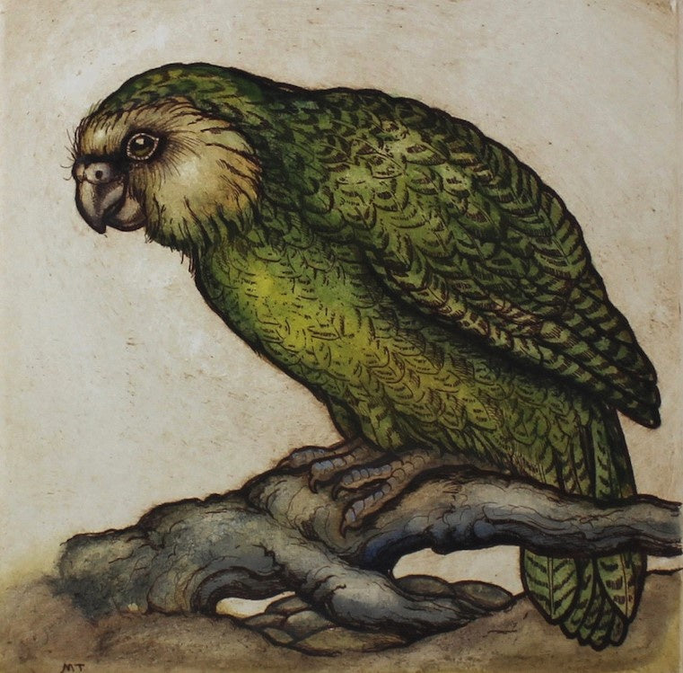 Kakapo, Night Parrot