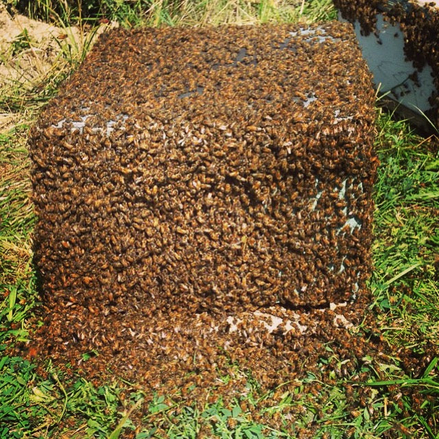 Full Bee Hive - End of May/Early June 2021