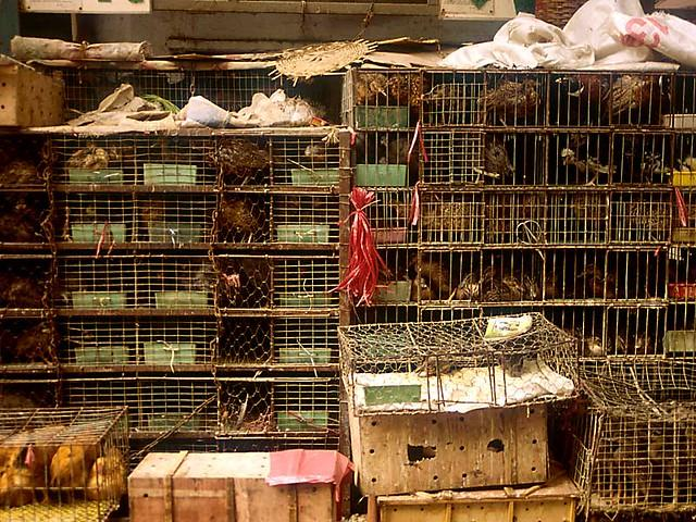 Calls for Ban on Wildlife Markets in China and the Rest of the World Get Louder