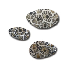 Load image into Gallery viewer, Petoskey Stone Magnets S/3