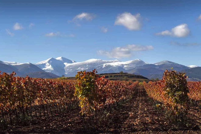 Our Wines From Rioja