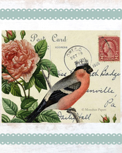 Load image into Gallery viewer, monahan paper SPS984bb red belly bird
